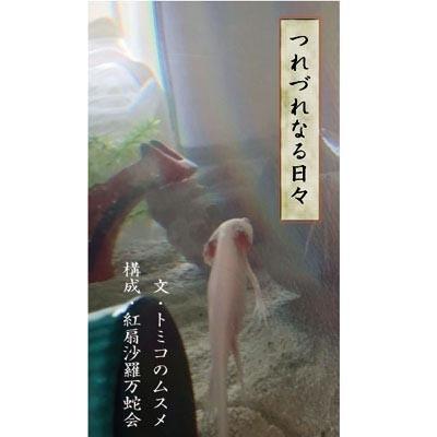 kounoikeさんのプロフィール