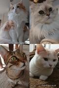 猫ねこぬこ