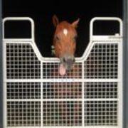 競走馬の成績情報とレース映像のまとめ