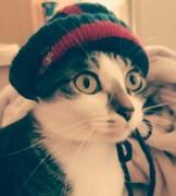 猫ハム人間暮らし