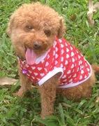 愛犬MS.BOO&どローカルベトナム