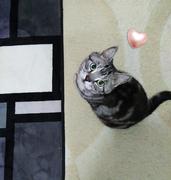 帰ってきた 猫と笑う