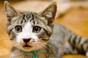 ズル猫のチラ裏ブログ
