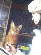 カリグラファーは猫がお好き?