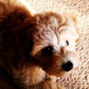 MaruPooLife マルプー登山犬モカ