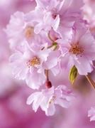 花の道さんのプロフィール