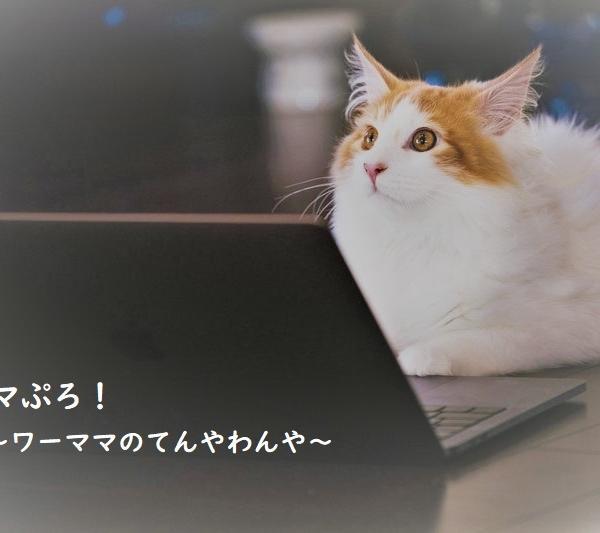 ナナコさんのプロフィール