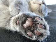ネコメジ - 面白かわいい猫・子猫画像まとめ