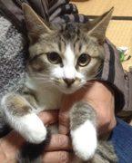 独居中年・オタン子パパが初めて猫を飼ったら?