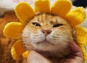 にゃんこまみれ隊犬猫ボラ部*はっぴぃめるしぃCats