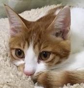 4匹の猫とかわいいおうちで暮らす