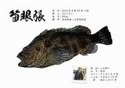 釣りながら (岐阜・三重・愛知・福井、他方面)