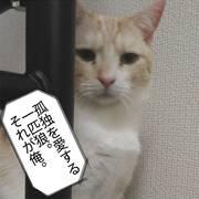 Nekono-hanashiさんのプロフィール