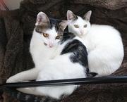 猫の「ロク」と「なな」のブログ