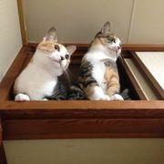猫ばあさん日記