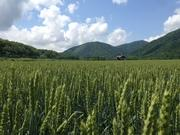 元農家の北海道中記