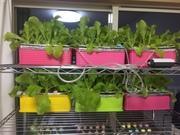 水耕栽培で野菜買わない生活