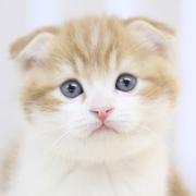 猫動画まとめ