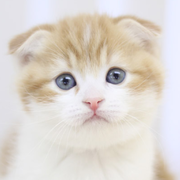 猫動画まとめさんのプロフィール