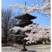 〜京都 古都の風景〜Beautiful scenery of Kyoto