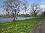 ぎょうの川歩き
