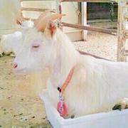 獣医学部に合格するための最強Blog