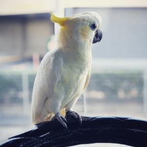 winston*bird