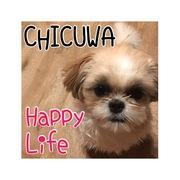 シーズーCHICUWAのHappy Life