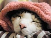 楽しきネコ貧生活 その3