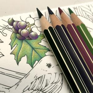 塗り絵と色鉛筆♪