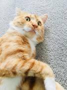 ネコとのSydney LIFE