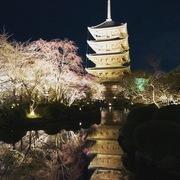 姉さんの京都ぶ〜らぶら