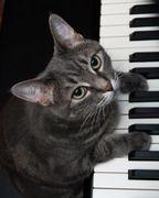 吾輩はピアノを弾く猫である。