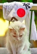 日本通アムロのエジプト生活とアラビア語