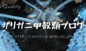 ザリガニ甲殻類ブログ