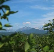 立山山麓ブルーベリー