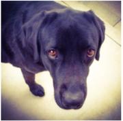黒犬さんのプロフィール
