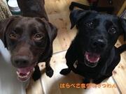 ココロも体も喜ぶ愛犬の手作りごはん〜はらぺこ食堂@てつわん〜