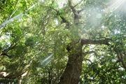君津という大自然に住む『ちま子』の自然案内ブログ