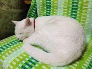 白猫チビタの小冒険