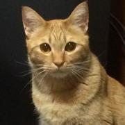猫好きおばちゃんのバイナリーオプション奮闘記