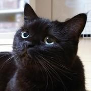 ひとりっ子の黒猫 -姫diary-