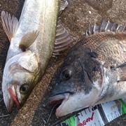 博多発 湾岸fishing