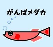 がんばメダカ ☆長崎わっしょい!☆