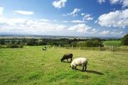 田舎サラリーマンが株式配当で放牧生活を目指すブログ