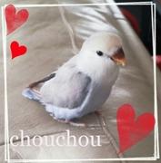 chouchouとほっこり