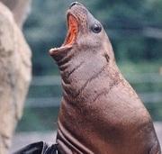 うさぎときどき水族館
