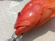 雄猫の石垣島釣行 釣り日記