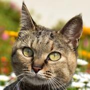 お出かけ猫 奈々 ブログ