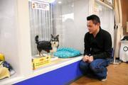 ペットの売買がない日本へ 澤木のブログ